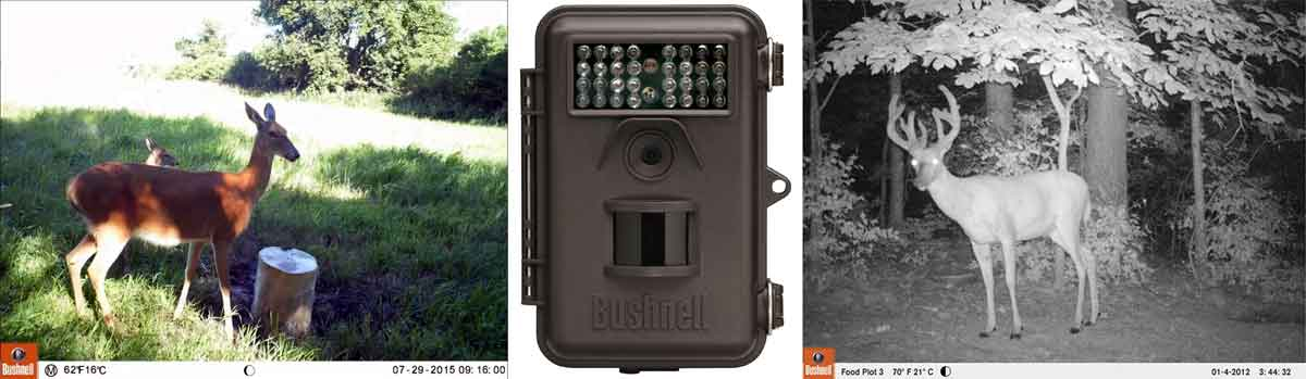 best game camera under 100 dollars - Bushnell 6MP Trophy - Consumer Files