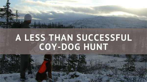 A Less Than Successful Coy-dog Hunt - Consumer Files