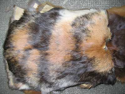An Image of Rabbit Fur Skin for Dealing With Fleas on Furbearer Hides
