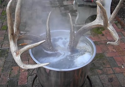 European Skull Mount Boiling the Skull Sample - Consumer Files