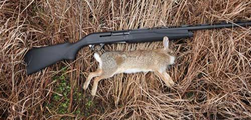 How to Hunt Rabbits Like a Pro a Dead Rabbit With Hunt - Consumer Files
