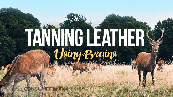 How to Tan Leather with Brains