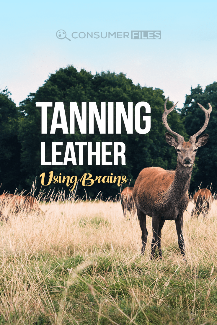Tanning hides can be a ton of work, but it can be done by anybody. Here's a complete guide on how you can brain-tan leather at home.