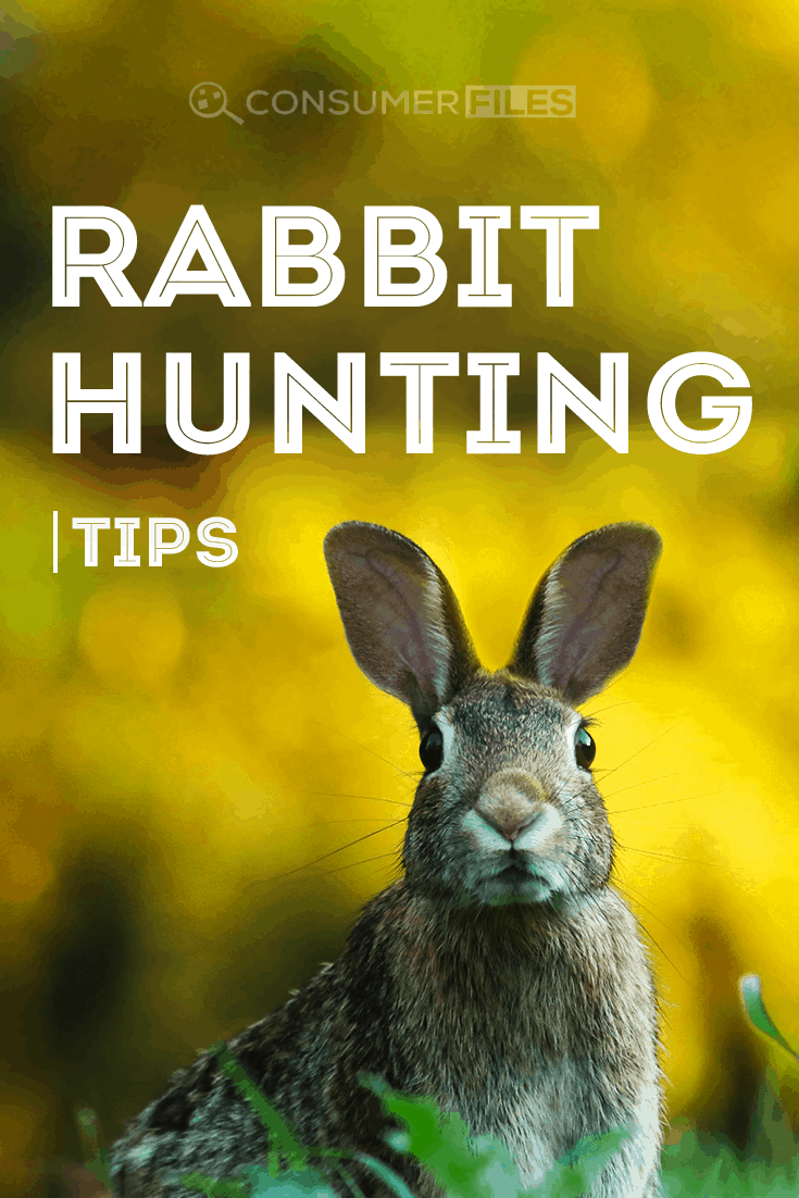 Just started hunting a rabbit? Check out our some of the best rabbit hunting tips today that can help you learn how to hunt rabbits like a pro.