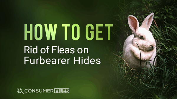 How to Get Rid of and Dealing with Fleas on Furbearer Hides