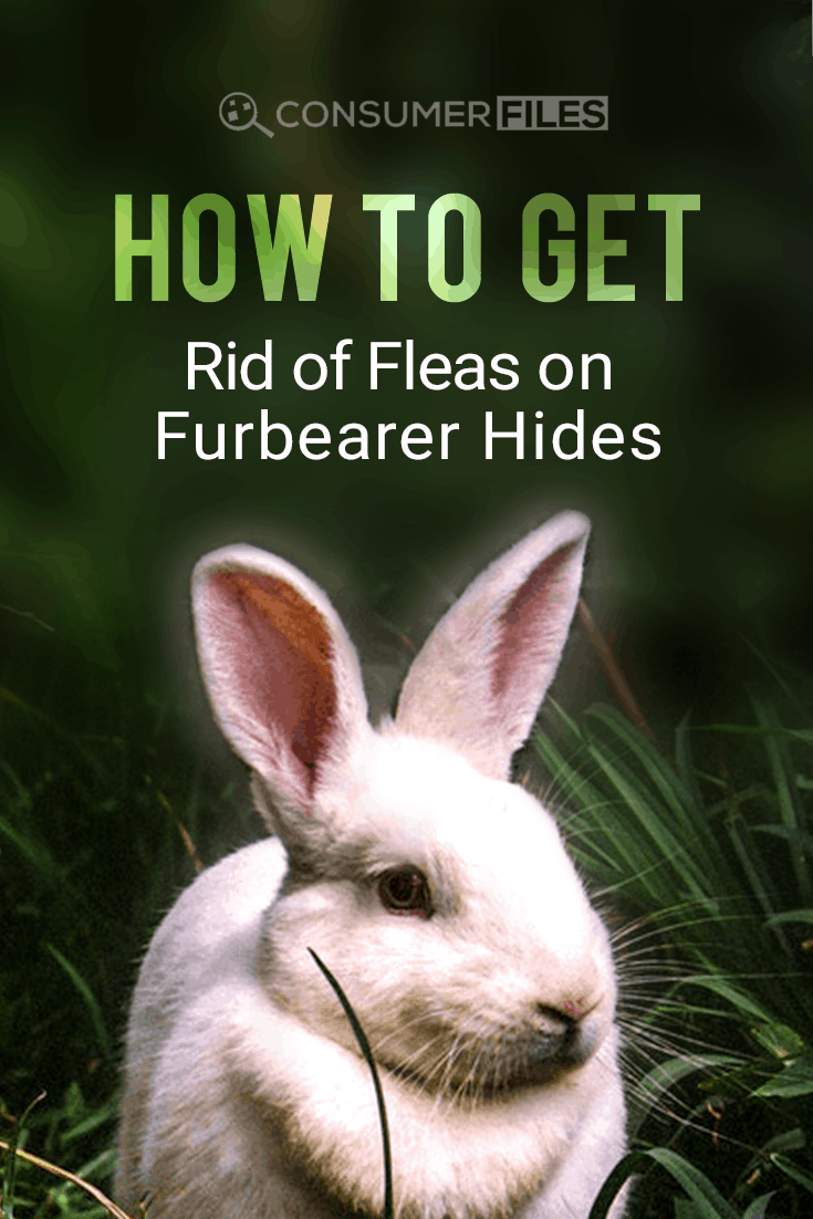 In this post, we'll look at how dealing with fleas on furbearer hides can be done, exploring traditional and modern methods that won't affect the quality of the hide.