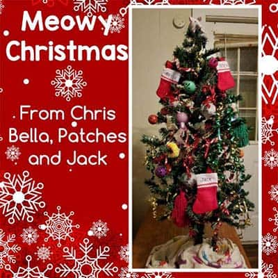 """Greeting card with message, """"Meowy Christmas From Chris, Bella, Patches, and Jack"""" with a picture of a decorated Christmas tree on the right"""