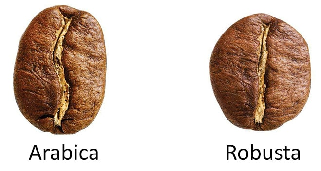 Arabica vs Robusta 2 Types of Coffee Beans