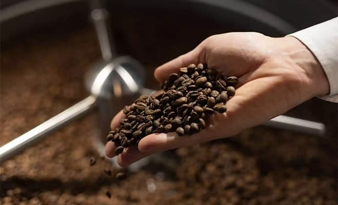 Robusta (Coffee caniphora) for our Coffee Bean Varieties