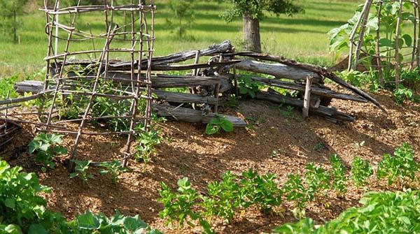 How to Grow Your Own Survival Garden backyard garden